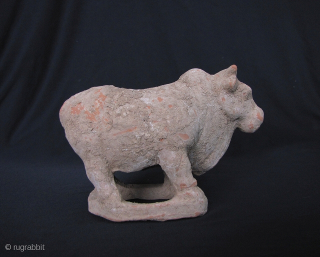 Tang Dynasty Ox: Classic buff pottery ox from the Tang Dynasty- a very sturdy and well sculpted piece. This would clean up very nicely with just a soak, a rinse and possibly  ...