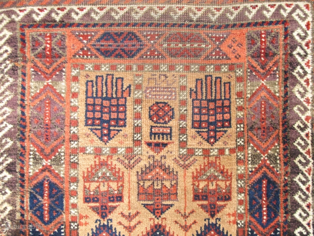 "Baluch Camel-Ground Prayer Rug with shrub-like hands and an inscription in aubergine. Good pile. size is 2'7""x5'5"""
