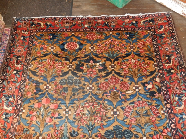 THIS ANTIQUE BAHKTIARI CARPET HAS A NICE GOLD FIELD OF EVEN COLOR.