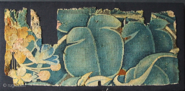 16th century 'Feuilles-de-Choux' tapestry fragment, mounted. With thanks to all my customers and wishing you all a very Happy New Year!