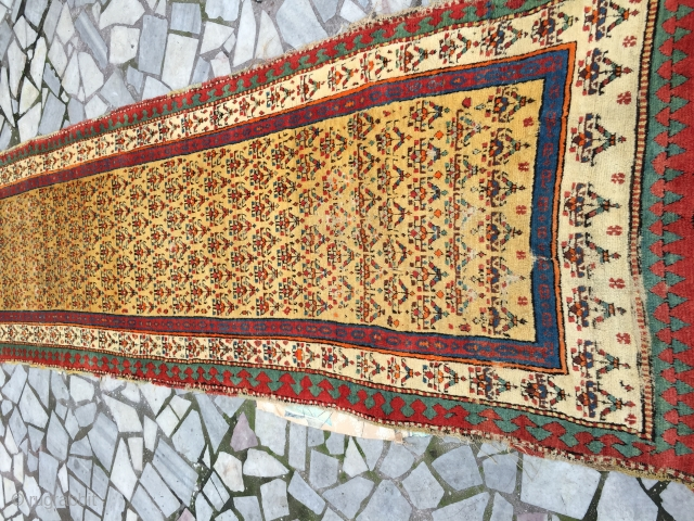 Noth west persian runner