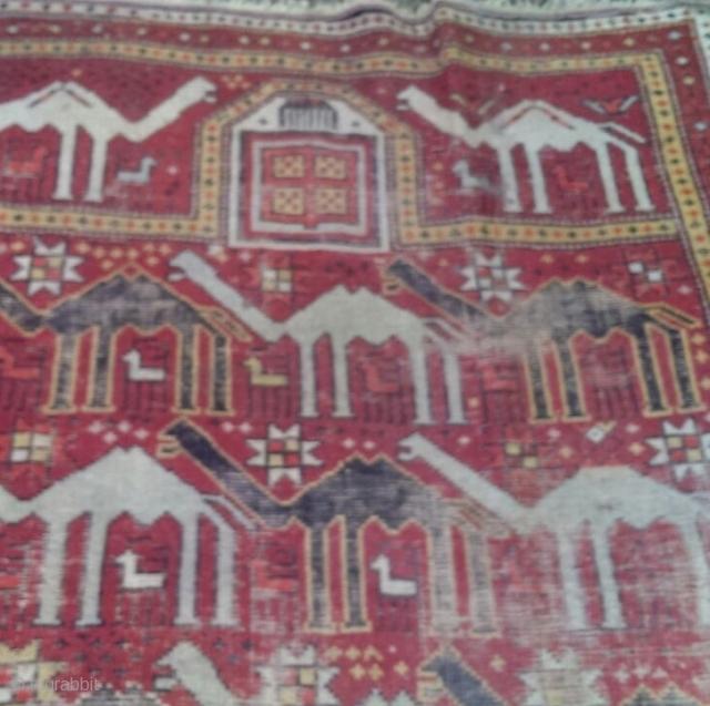 Shirwan size 173/128