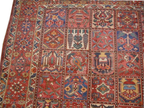 """Baktiar Persian knotted circa in 1920 antique, 460 x 365 (cm) 15' 1"""" x 12'  carpet ID: P-789 Thick pile in perfect condition, the knots are hand spun wool, all over  ..."""