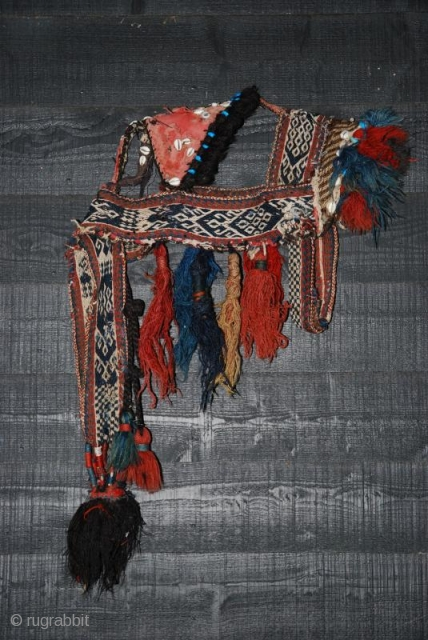 This is a rare Bakhtiari horse bridle ca 1920 (or older,see Hali 84), made from warpfaced patterned band and decorated with a lot of kauri shells and old ceramic turkoois beads. Later  ...