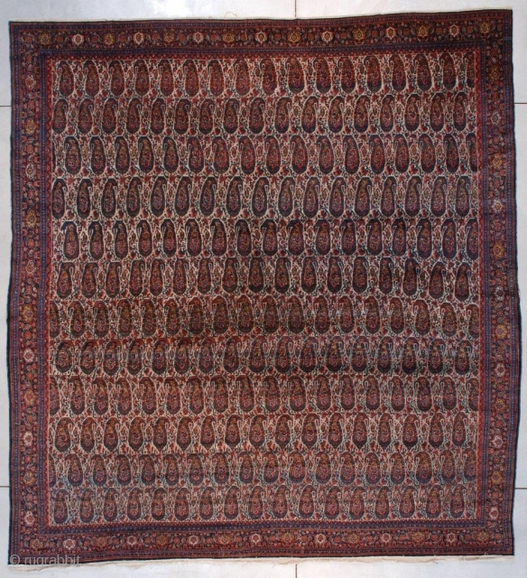 #7381 Senna Antique Persian Rug 