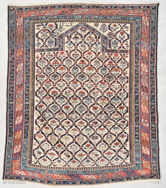 #7559 Marasali Shirvan 
