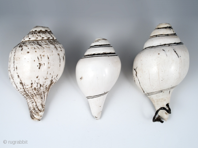Conch shell trumpets, Himalayas. 19th century.