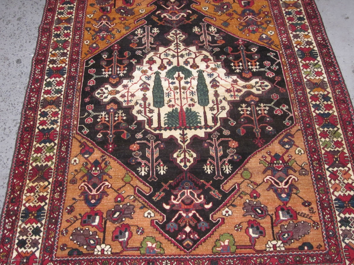 Antique Bakhtiari Rug Chahar Mahal District West Central