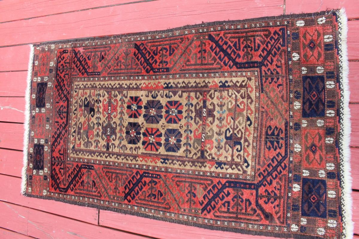Fool damn Asian camel rug