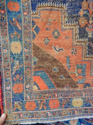 Avsar Carpet
