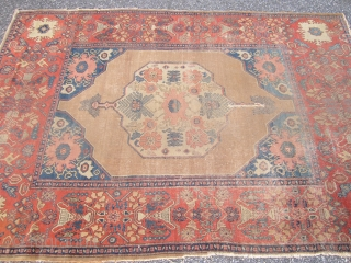 alireza