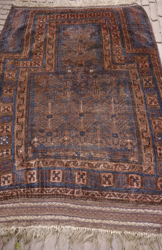 Rare Baluch prayer rug with tree motif, some wear,but no restaurations, repairs, holes etc. some color change, natural colours with a few aniline accents (gone white)soft and nice wool, handwashed, intense blue.
