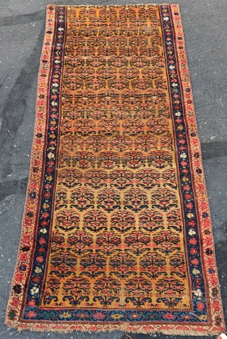 "Northwest Persian Kurdish runner fragment with flowering shrubs on a gold ground, very nice color. 2'8""x6'8""."