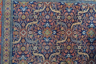 A good carpet is a sign of a cat loving it!