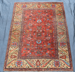 A fine and quite beautiful antique Ferahan carpet. Soft madder ground with large allover design flanked by wide yellow green borders. A top flight furnishing carpet in low pile with some high  ...