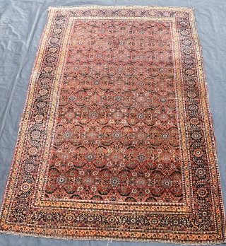 An antique North West Persian carpet, beautiful all-over design on red ground. Even low pile, various patches and old repairs, however the carpet remains a substantial and very heavy piece, suitable for  ...