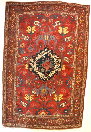 Antique all wool Bijar with glorious ground colour, circa 1900. 227x149cm