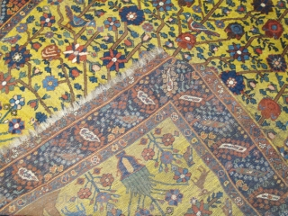 Antique rare Neyriz rug with tree of life design   Circa 1900, pure wool  $1260