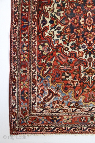 Bakhtiar Carpet id: Size: 221x165 Thickness approx: 14 mm Age: made around 1900 Pile: Wool