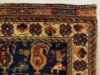 Fine Afshar