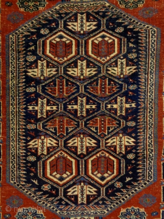 Very Fine Shirwan