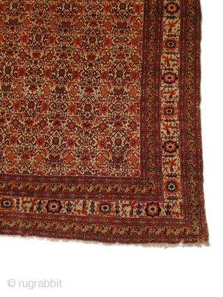 Senneh Rug: extremely thin, durable, and with extremely fine weaving (check pictures of back side)