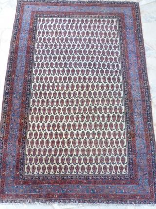 Saraband circa 1880 - 1900.  195x130.  550€