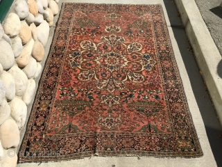 "As found: Late 1800's Persian Ferahan measuring 4'x 6'2"" with low even pile, little loss at the ends, very finely woven, thanks for looking."