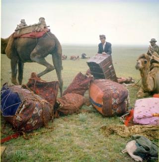 "Shahsavan Heris region, wool on cotton pile bedding bag side panel. Mostlt natural colors, Circa 1920-1930s - size: 44"" X 17"" -- 113 cm X 44 cm"