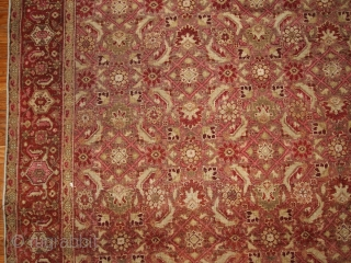#1B147  Handmade antique Indian Amritsar rug 6.11' x 9.7' ( 216cm x 295cm ) 1900.C