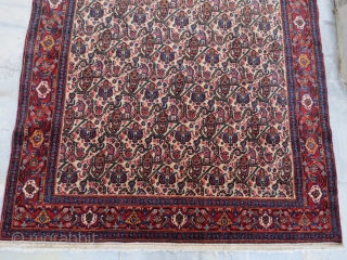 Antique Sine Rug in perfect condition .200 x 140 cm 