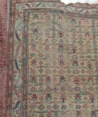 early and rare  yellow ground white border  caucasian sumak with chichi design lots of interesting details  not expensiv...