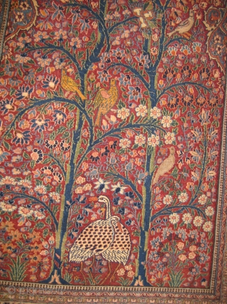 An old Persian Signed carpet extremely fine in mint condition, size: 7 x 4 feet.