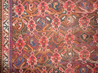 Antique  Afshar 19 th. century  135 X 154  cm.  Natural  colors,