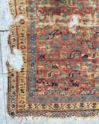 Iraq Mosul  Kurdish rug 18th century    size 310x160cm