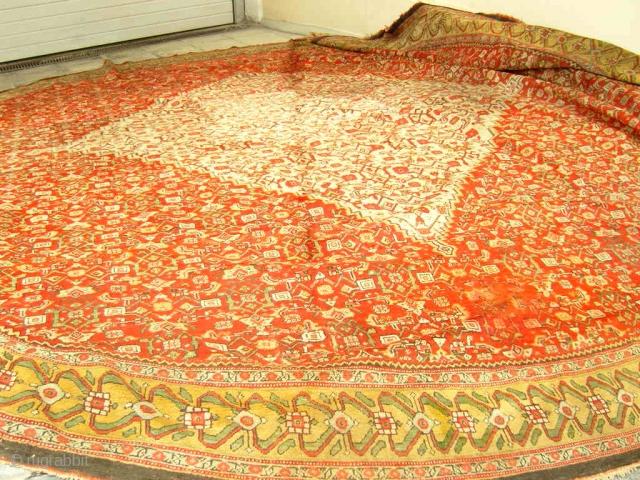 mahal  oval  rug   520 x 520   cm
