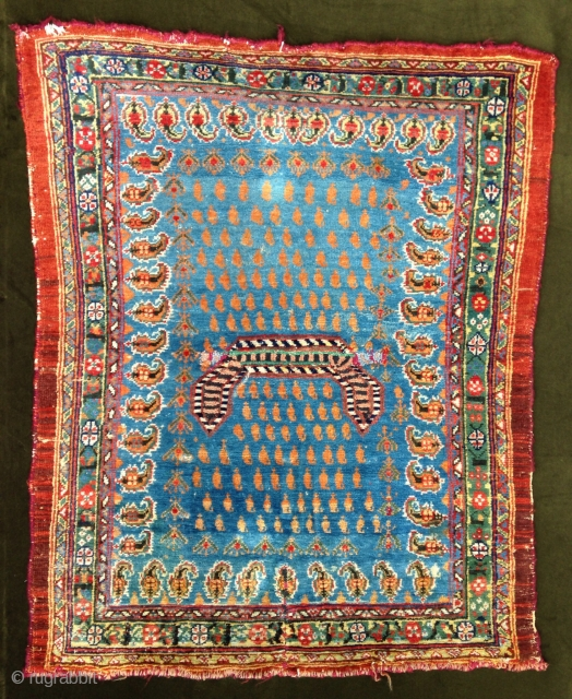 A lovely 'Shahsevan' Sadle cover , Great colors ! North west Persia . Warp in colton .  Circa : 1850 !