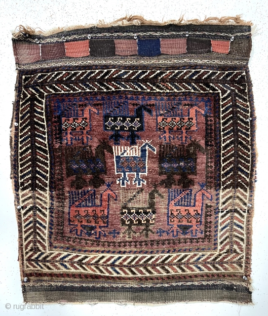 """Antique Baluch bird bagface. Nicely drawn large colorful birds with the iconic ivory center bird. Eye catching """"fish bone"""" border. Relatively coarse weave with some wear as shown. All natural colors. Remnant  ..."""