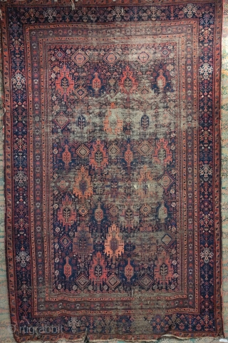 Baluch main carpets hanging at Krimsa Gallery. 