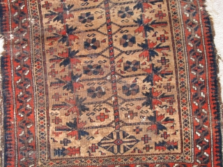 Baluch Camel Ground Prayer Rug, fantastically soft wool (just ask the moths!) saturated madder red. Great tactile quality. Good drawing with interesting asymmetries. This is a former Basha piece.