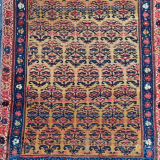 """Northwest Persian Kurdish runner fragment with flowering shrubs on a gold ground, very nice color. 2'8""""x6'8""""."""