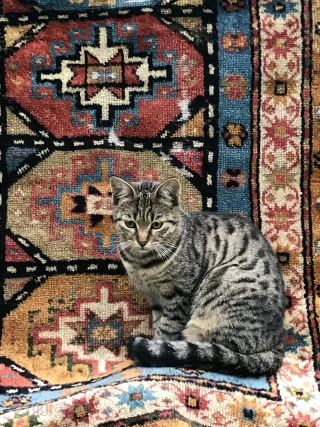Antique Gendje is looking for a new home, 183x85cm, beautiful colours, cats not included.
