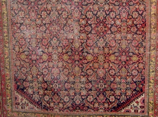 "Antique Persian Ferahan carpet, circa 1900, with the legendary apple green borders, with squarish format.   59"" by 70"".  Condition as shown (end reduction, edges recast, wear in the herati  ..."