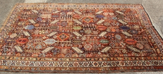 Great Shekarlu with cat-like fur 5 x 8 Several old repairs but high pile, great colour