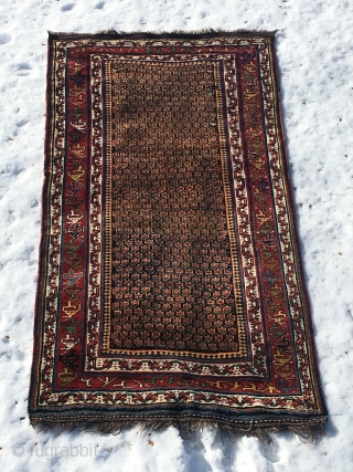 Antique or very close to be Luri rug in good clean condition and with nice wool and colours. Rug is 254x138 cm, ends are fine and the sides are partly restored.