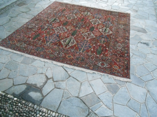cm 355x328 is tha size of this Chahar Mahal -va-Bachtiari carpet. Thia panels carpet is in very good condition, washed and ready for domestic use. Vegetal dyes and fine knot for this one. Other info  ...