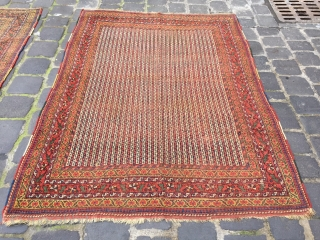 two similar rugs from afshar or could be khamseh south Persia size 190x140 cm low pile one of them the condition is better