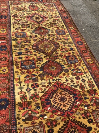 Antique Luri Bakhtiary tribal rug from the 19th century, beautiful yellow ground color, wool foundation. Size: 390x174cm / 12'8''ft x 5'7''ft, good condition.