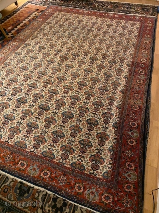 Semi- Antique persian carpet finely knotted in Zil-E-Sultan pattern with a bright ivory background. 3x2 meters.