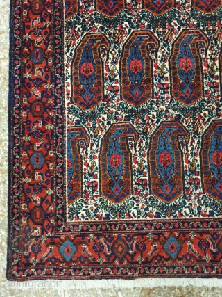 A symmetrically knotted Kurdi rug